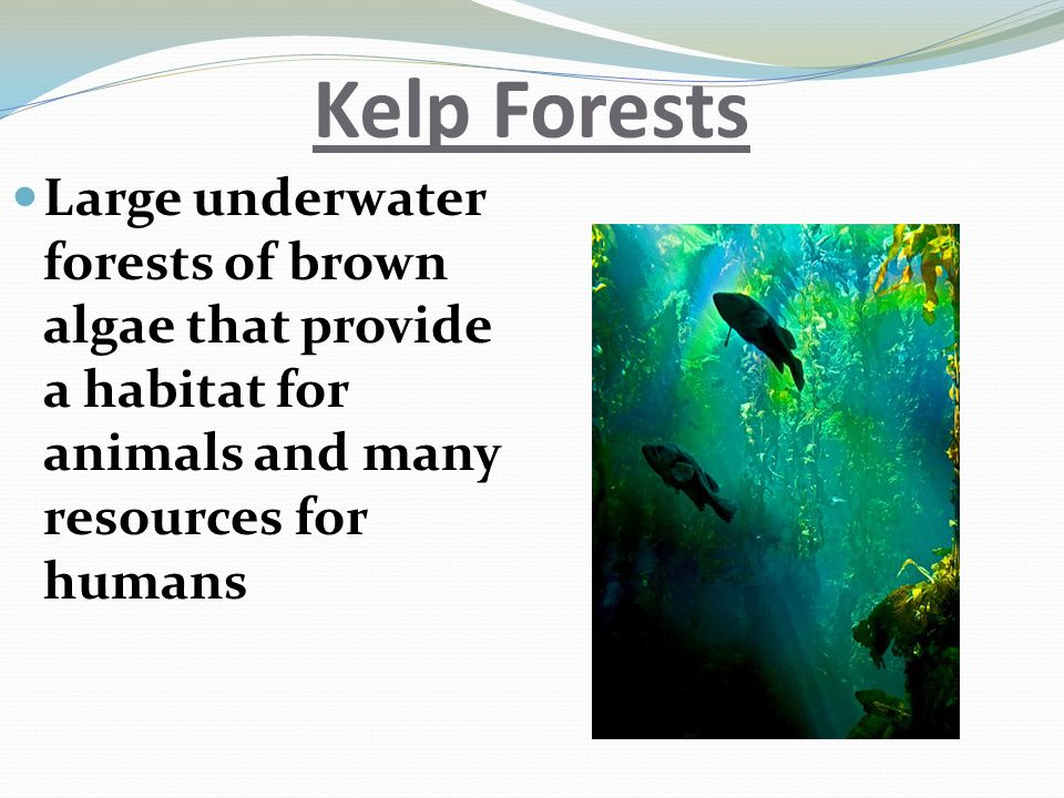 Kelp Forests Large underwater forests of brown algae that provide a habitat for animals and many resources for humans