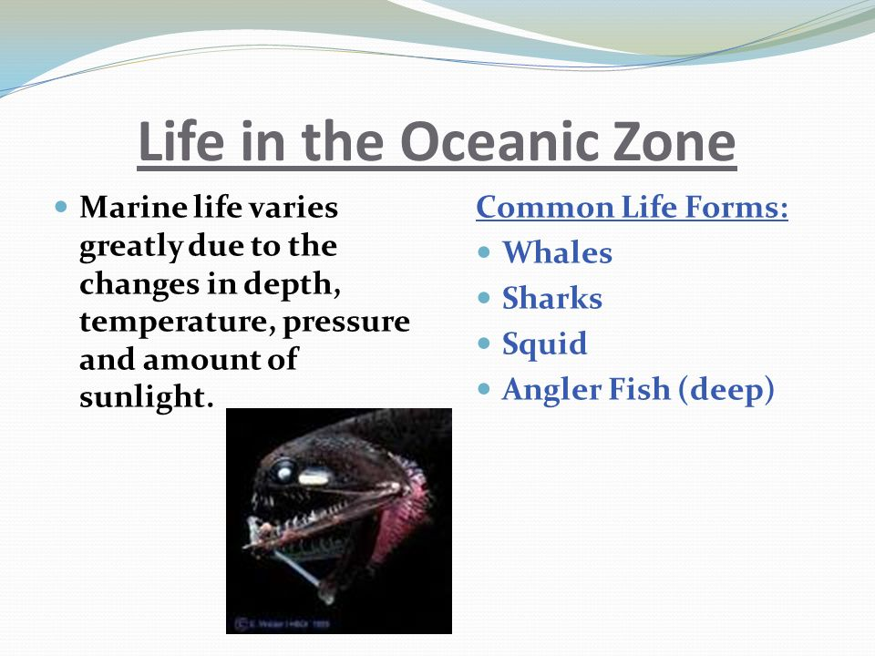 Life in the Oceanic Zone Marine life varies greatly due to the changes in depth, temperature, pressure and amount of sunlight.