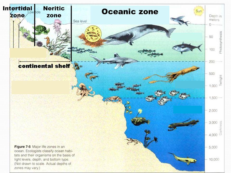 Intertidal zone Neritic zone Oceanic zone