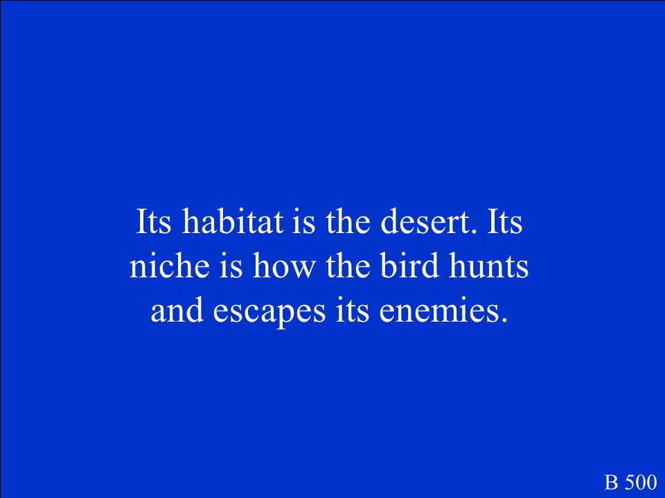 What is the difference between a roadrunner's habitat and its niche B 500