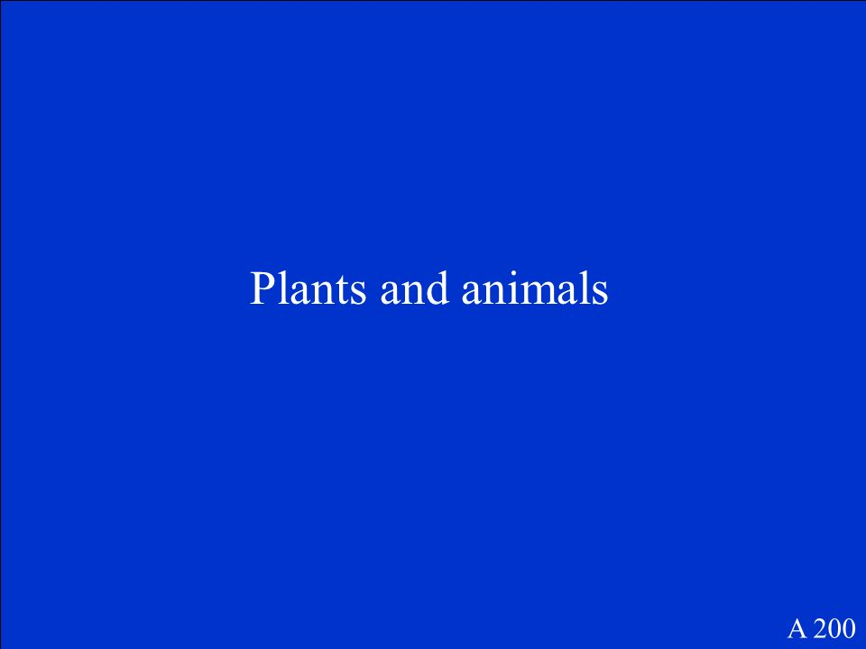What are the living parts of a forest ecosystem A 200