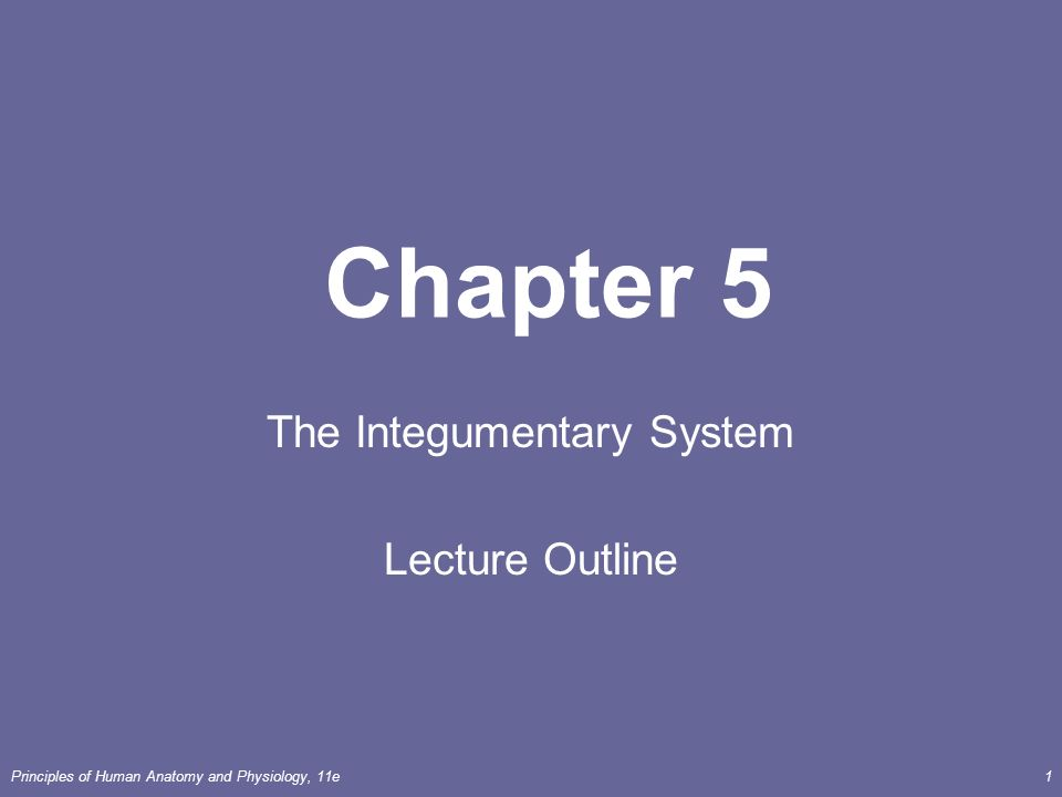 Principles of Human Anatomy and Physiology, 11e1 Chapter 5 The ...