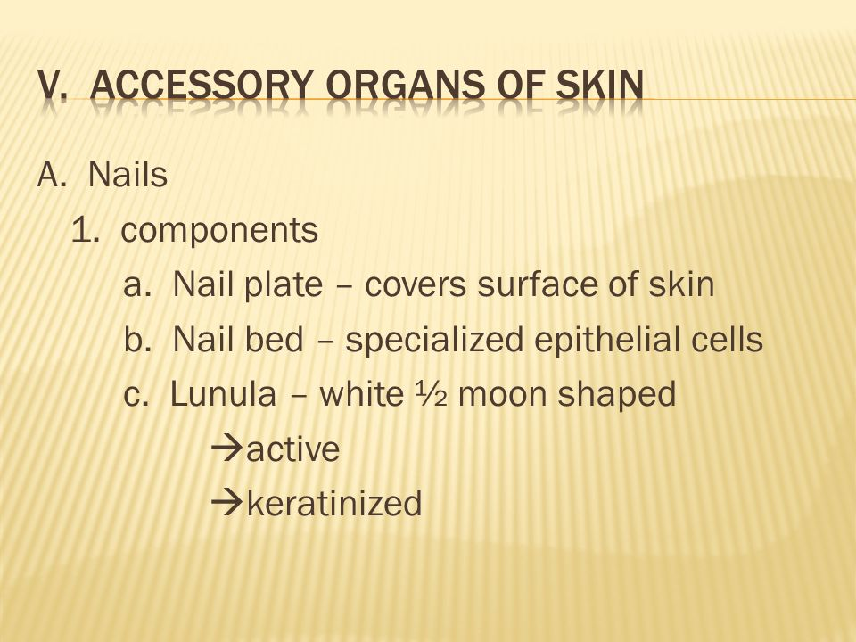 A. Nails 1. components a. Nail plate – covers surface of skin b.