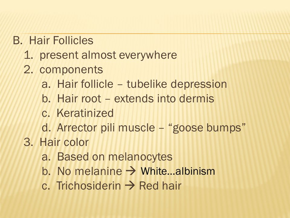 B. Hair Follicles 1. present almost everywhere 2.
