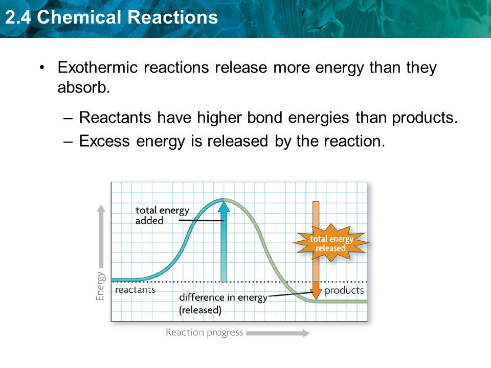 2.4 Chemical Reactions Exothermic reactions release more energy than they absorb.