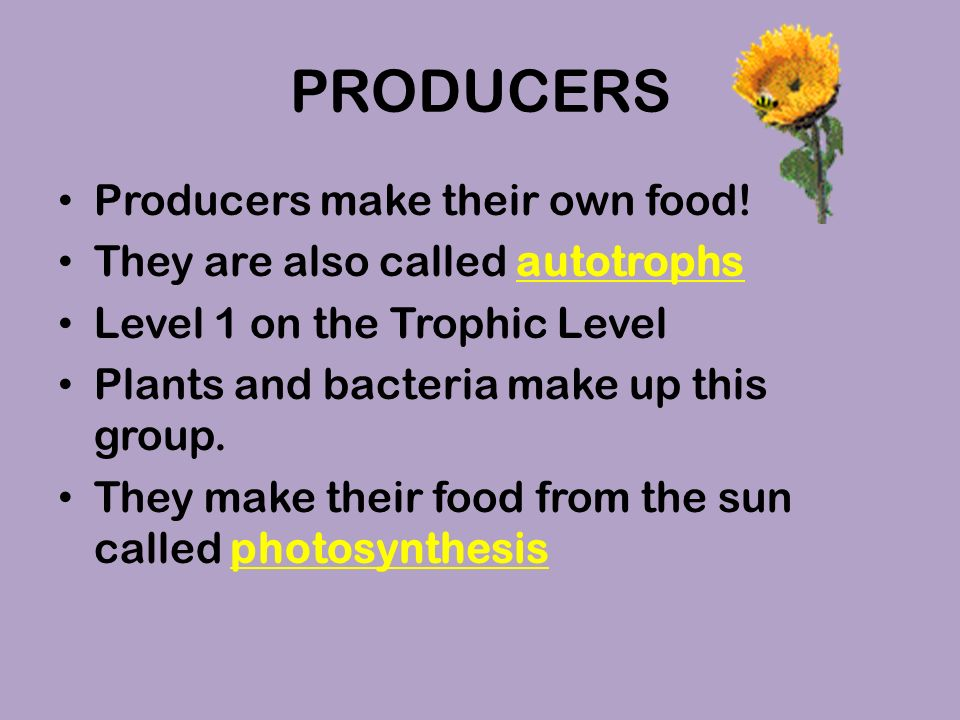 Producers Autotrophs – self feed Use sunlight to create carbohydrates via photosynthesis Ex – Plants, algae and some bacteria Some bacteria create organic compounds from inorganic chemicals – Chemosynthesis – Live in remote places.