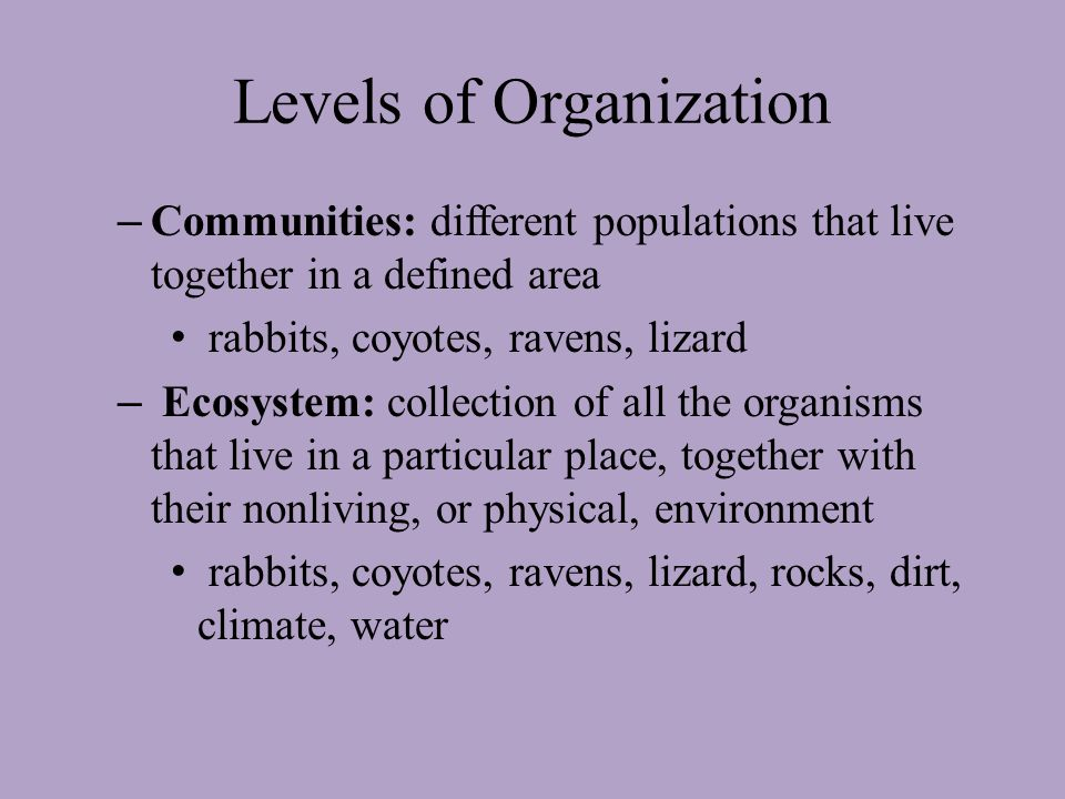 Levels of Organization – Individual: interactions between an organism and its surroundings cottontail rabbit – Population: groups of individuals that belong to the same species and live in the same area group of cottontail rabbits