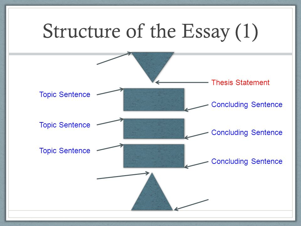 the structure of the essay explanation of paragraphs 15 structure of the essay 1 thesis statement introductory hook topic sentence concluding sentence restatement of thesis bit of wit or area of further