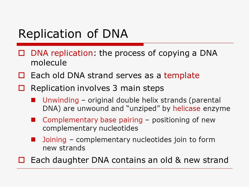 Worksheet Dna The Molecule Of Heredity Worksheet dna molecule and replication worksheet worksheets for school kaessey intrepidpath