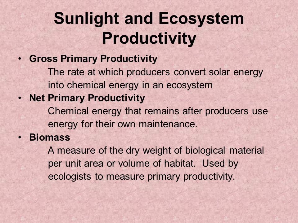 Sunlight and Ecosystem Productivity Gross Primary Productivity The rate at which producers convert solar energy into chemical energy in an ecosystem Net Primary Productivity Chemical energy that remains after producers use energy for their own maintenance.