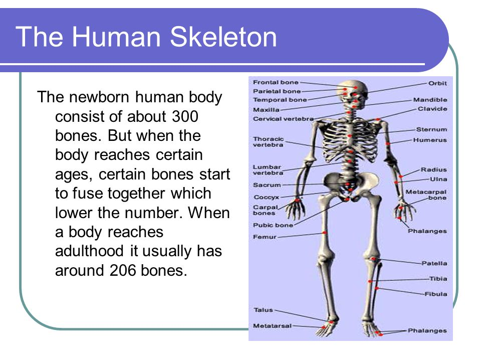 skeletal system. types of skeletons there are 2 types of skeleton, Skeleton