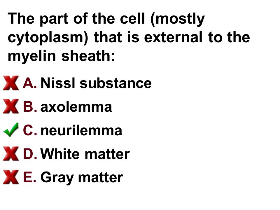 The part of the cell (mostly cytoplasm) that is external to the myelin sheath: A.Nissl substance B.axolemma C.neurilemma D.White matter E.Gray matter