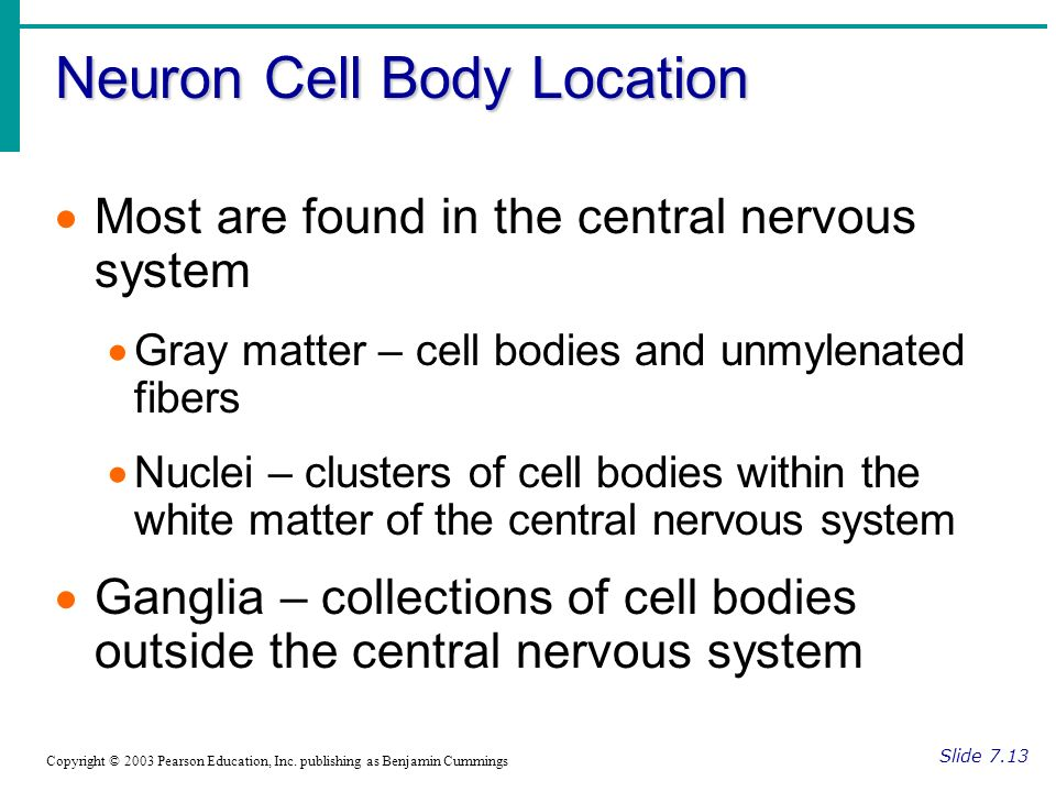 Neuron Cell Body Location Slide 7.13 Copyright © 2003 Pearson Education, Inc.