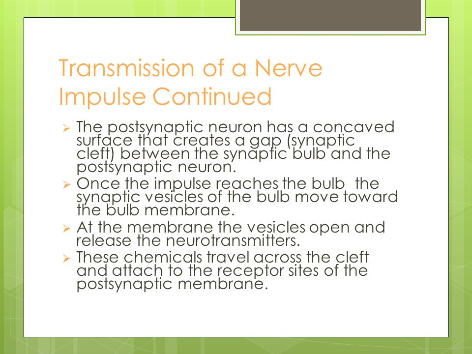 Transmission of Nerve Impulse  Can happen neuron to neuron, neuron to muscle etc.