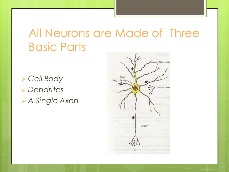 What is a Neuron.