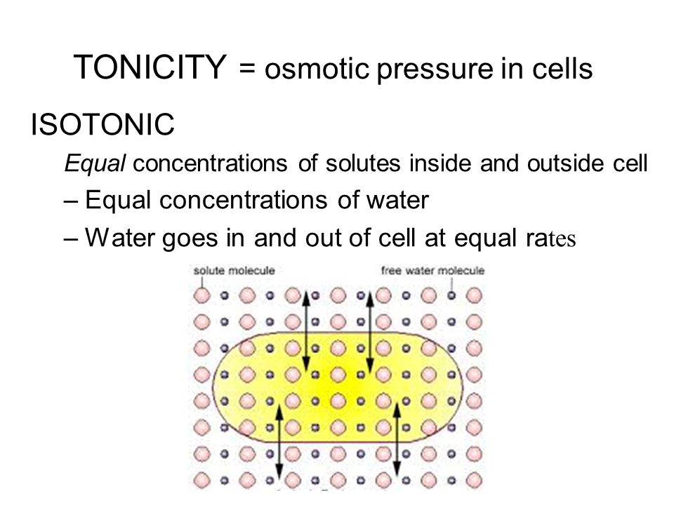 TONICITY = osmotic pressure in cells ISOTONIC Equal concentrations of solutes inside and outside cell –Equal concentrations of water –Water goes in and out of cell at equal ra tes