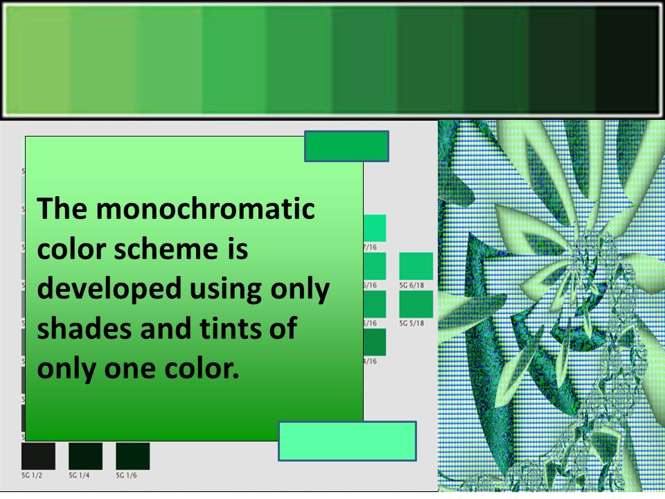 4 The monochromatic color scheme is developed using only shades and tints  of only one color.