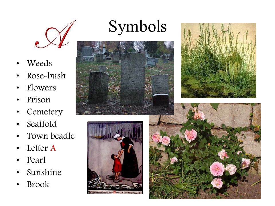 the symbol of the rosebush in nathaniel hawthornes novel the scarlet letter Need help on symbols in nathaniel hawthorne's the scarlet letter check out our detailed analysis from the creators of sparknotes.