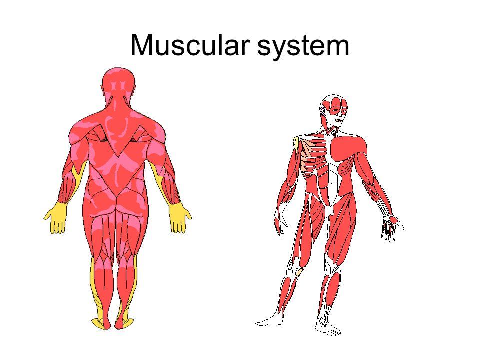 Nett Anatomie Und Physiologie Richtungsbegriffe Quiz Bilder ...