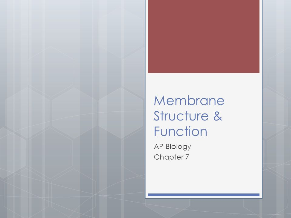 Membrane Structure & Function AP Biology Chapter 7