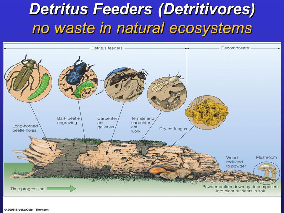 Intertidal Organisms 2 U2013 Animals | Updates From The Paleontology Lab