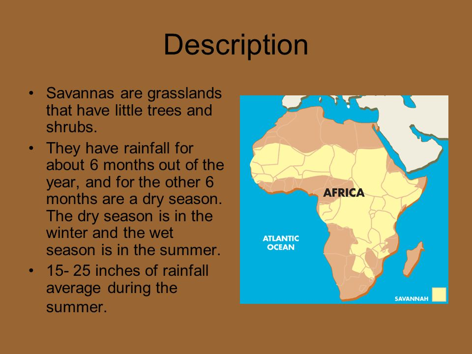 Description Savannas are grasslands that have little trees and shrubs.