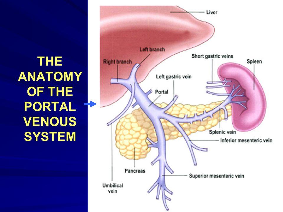 Liver Cirrhosis Liver Cirrhosis The Anatomy Of The Portal Venous
