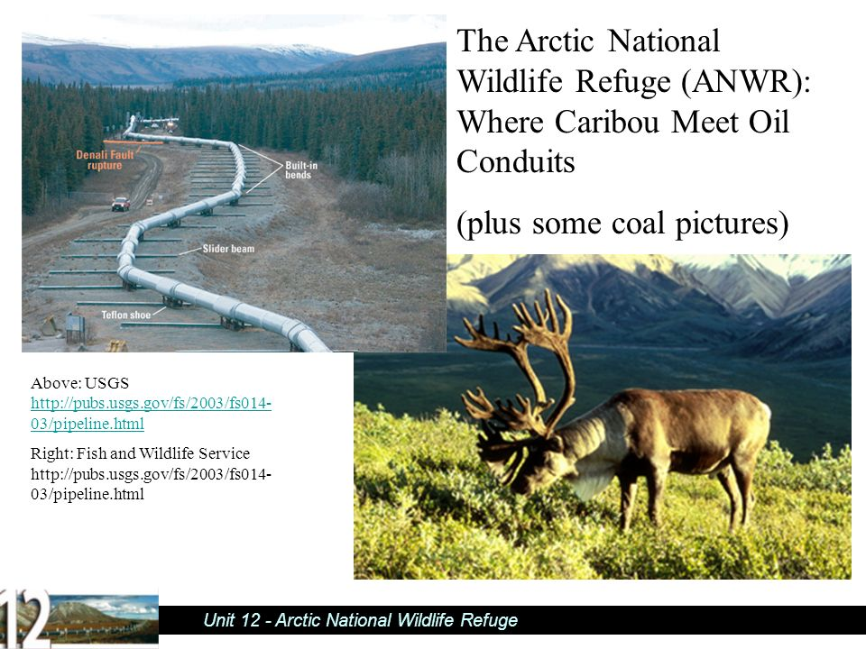 an introduction to the history of the arctic national wildlife refuge Preservation of the arctic national wildlife refuge: a theoretical approach caroline a leonard the arctic national wildlife refuge (anwr or the refuge.