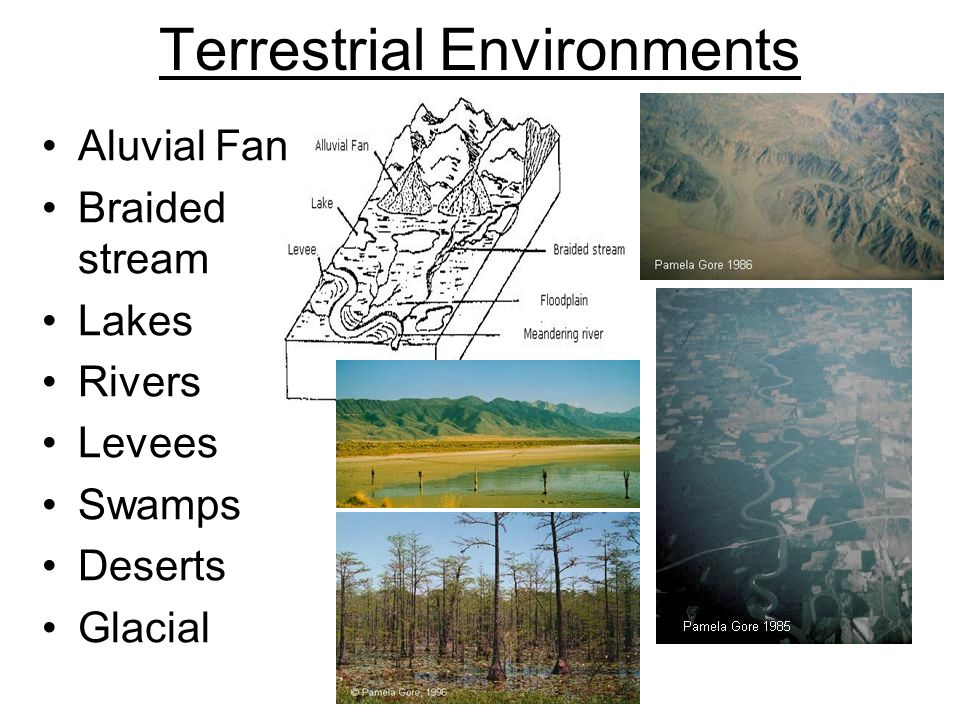 Terrestrial Environments Aluvial Fan Braided stream Lakes Rivers Levees Swamps Deserts Glacial