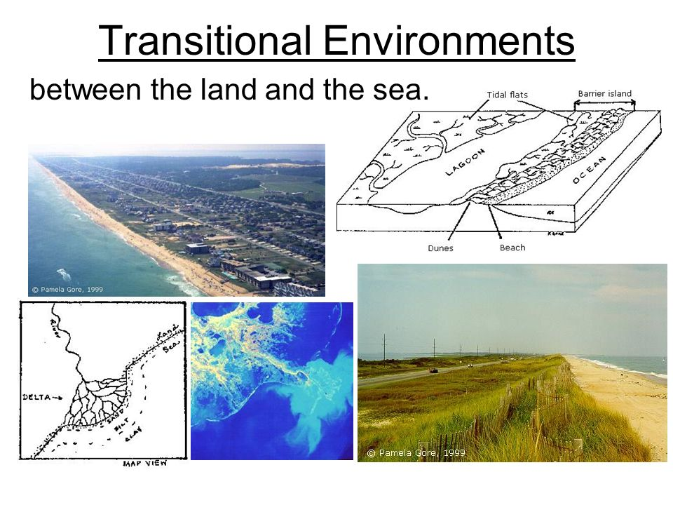 Transitional Environments between the land and the sea.