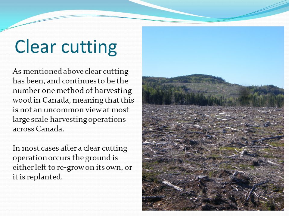 Clear cutting As mentioned above clear cutting has been, and continues to be the number one method of harvesting wood in Canada, meaning that this is not an uncommon view at most large scale harvesting operations across Canada.