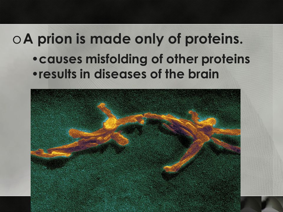 o A prion is made only of proteins.