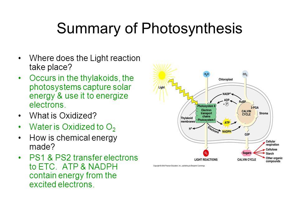 do photosythesis