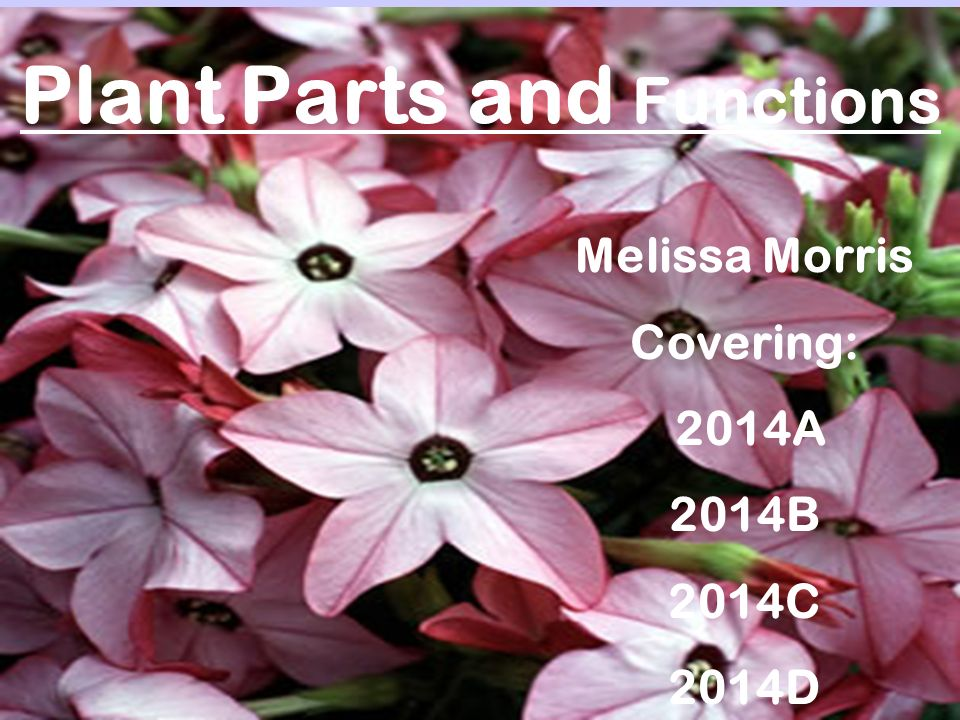 Plant Parts and Functions Melissa Morris Covering: 2014A 2014B 2014C 2014D
