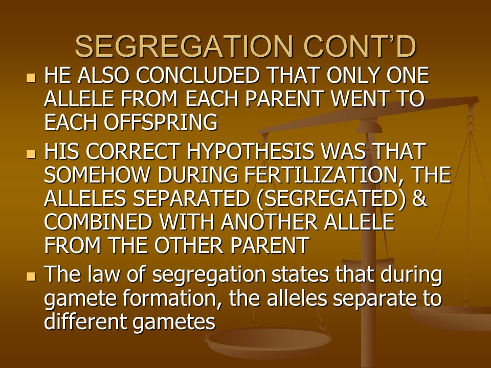THE LAW OF SEGREGATION MENDEL ASKED HIMSELF…….. HOW DID THE RECESSIVE SHORT PLANTS REAPPEAR IN THE F2 GENERATION MENDEL ASKED HIMSELF…….. HOW DID THE RECESSIVE SHORT PLANTS REAPPEAR IN THE F2 GENERATION HE CONCLUDED THAT EACH TALL PLANT FROM THE F1 GENERATION CARRIED TWO ALLELES, 1 DOMINANT TALL ALLELE & ONE RECESSIVE SHORT ALLELE HE CONCLUDED THAT EACH TALL PLANT FROM THE F1 GENERATION CARRIED TWO ALLELES, 1 DOMINANT TALL ALLELE & ONE RECESSIVE SHORT ALLELE SO ALL WERE Tt SO ALL WERE Tt
