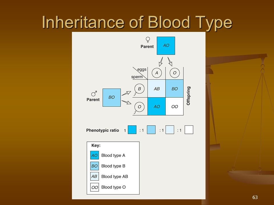 Multiple alleles controlling the ABO blood groups