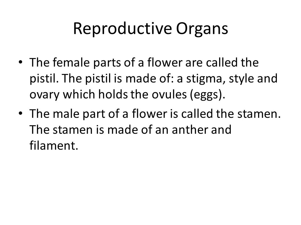 Reproductive Organs The female parts of a flower are called the pistil.