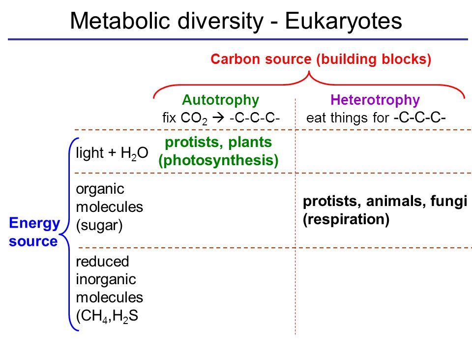 Metabolic diversity - Eukaryotes Carbon source (building blocks) AutotrophyHeterotrophy fix CO 2  -C-C-C-eat things for -C-C-C- light + H 2 O organic molecules (sugar) reduced inorganic molecules (CH 4,H 2 S Energy source protists, plants (photosynthesis) protists, animals, fungi (respiration)