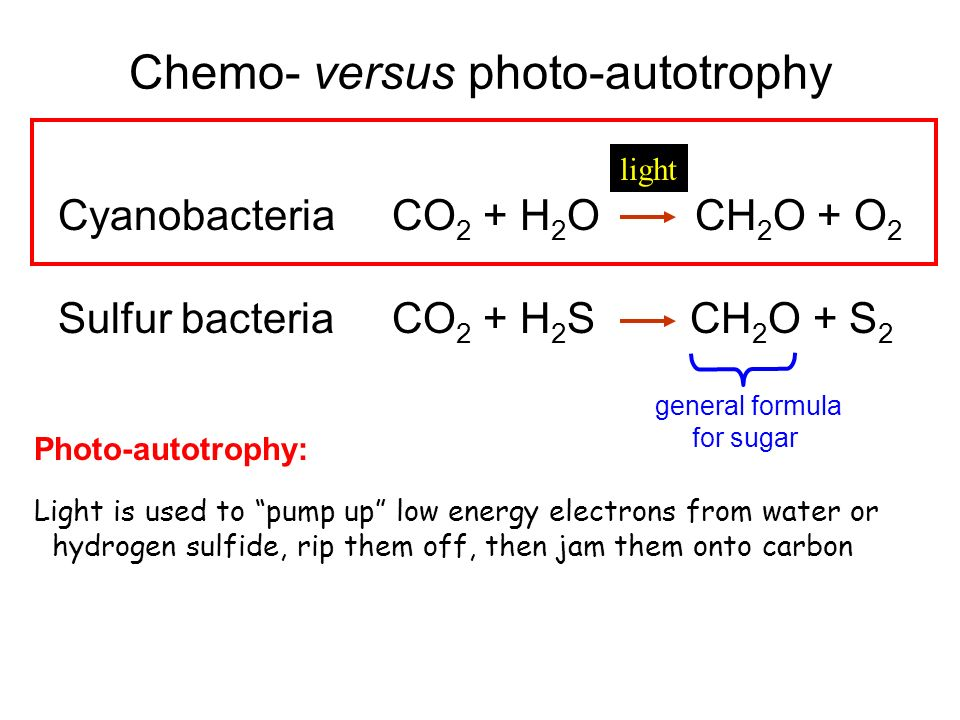 Chemo- versus photo-autotrophy Cyanobacteria CO 2 + H 2 O CH 2 O + O 2 Sulfur bacteria CO 2 + H 2 S CH 2 O + S 2 general formula for sugar light Photo-autotrophy: Light is used to pump up low energy electrons from water or hydrogen sulfide, rip them off, then jam them onto carbon