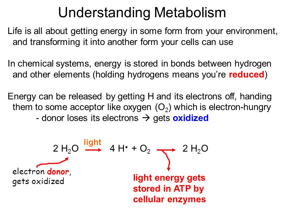 Understanding Metabolism Life is all about getting energy in some form from your environment, and transforming it into another form your cells can use In chemical systems, energy is stored in bonds between hydrogen and other elements (holding hydrogens means you're reduced) Energy can be released by getting H and its electrons off, handing them to some acceptor like oxygen (O 2 ) which is electron-hungry - donor loses its electrons  gets oxidized 2 H 2 O 4 H · + O 2 2 H 2 O light electron donor, gets oxidized light energy gets stored in ATP by cellular enzymes