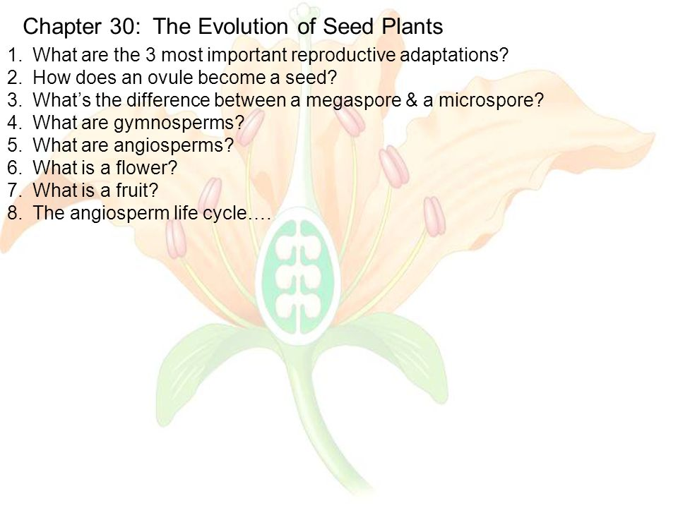 Chapter 30: The Evolution of Seed Plants 1.What are the 3 most important reproductive adaptations.