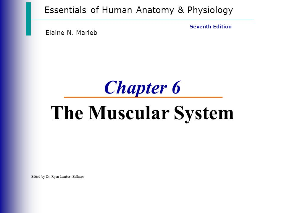Essentials of Human Anatomy & Physiology Seventh Edition Elaine N ...