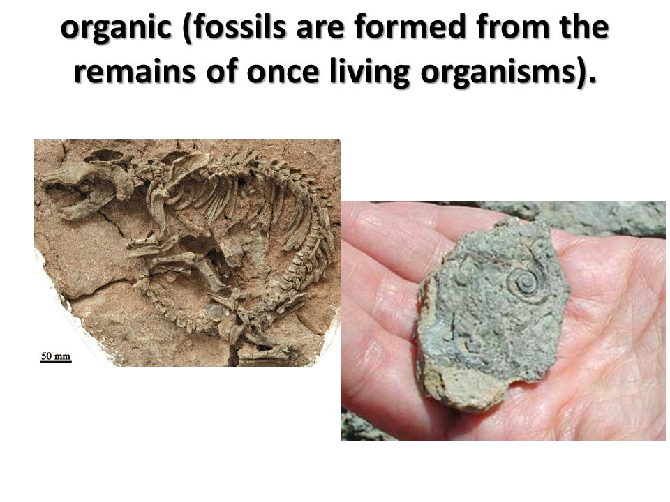 organic (fossils are formed from the remains of once living organisms).