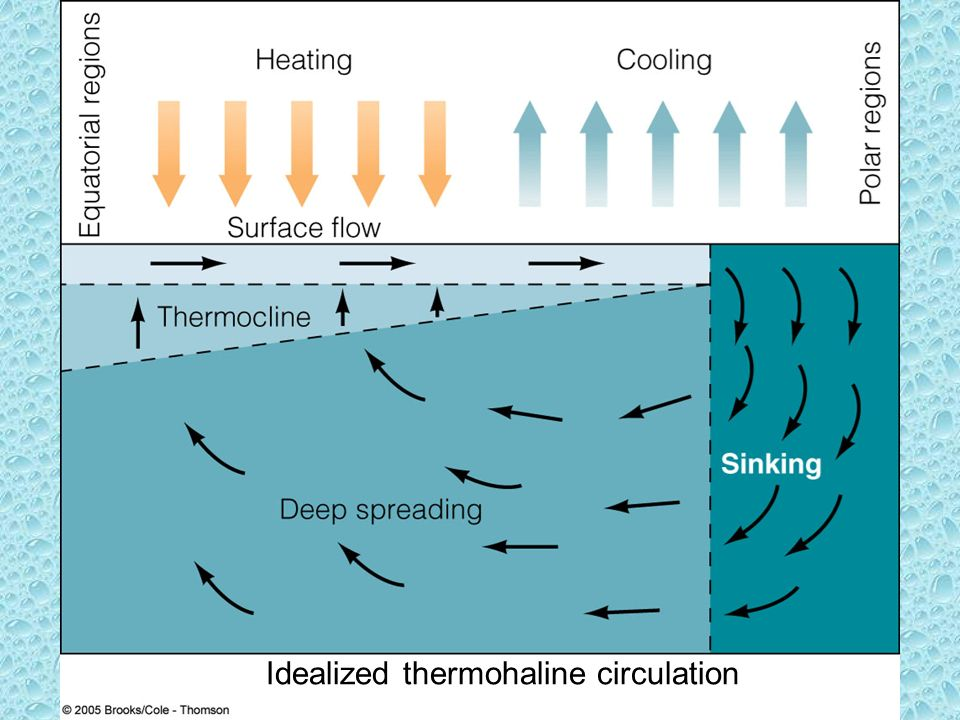 Idealized thermohaline circulation