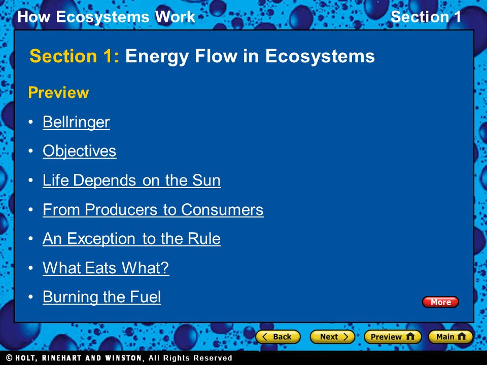 How Ecosystems WorkSection 1 Section 1: Energy Flow in Ecosystems Preview Bellringer Objectives Life Depends on the Sun From Producers to Consumers An Exception to the Rule What Eats What.