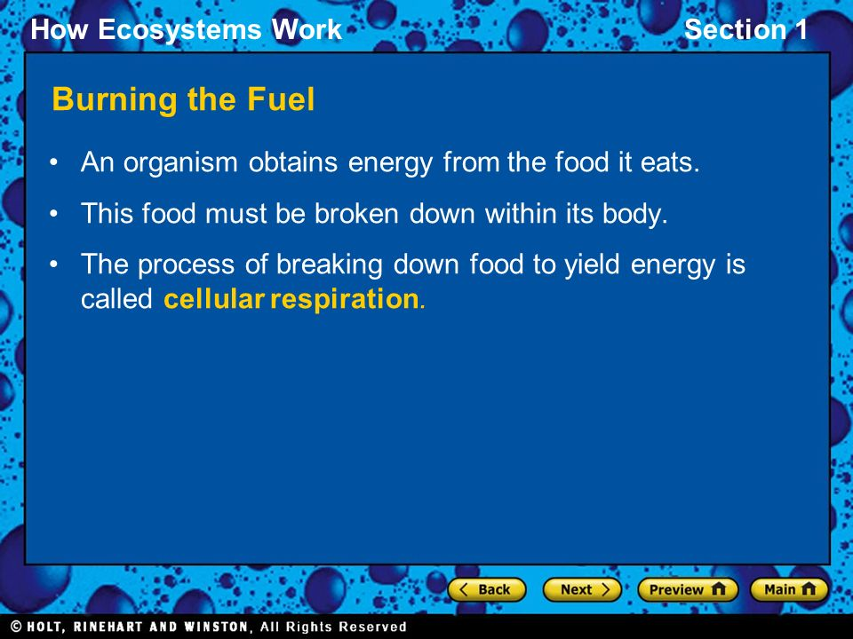 How Ecosystems WorkSection 1 Burning the Fuel An organism obtains energy from the food it eats.