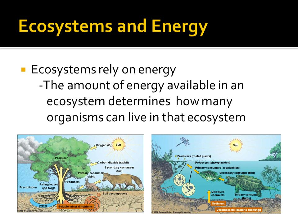  Ecosystems rely on energy -The amount of energy available in an ecosystem determines how many organisms can live in that ecosystem