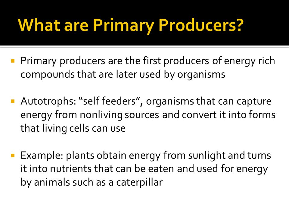  Primary producers are the first producers of energy rich compounds that are later used by organisms  Autotrophs: self feeders , organisms that can capture energy from nonliving sources and convert it into forms that living cells can use  Example: plants obtain energy from sunlight and turns it into nutrients that can be eaten and used for energy by animals such as a caterpillar