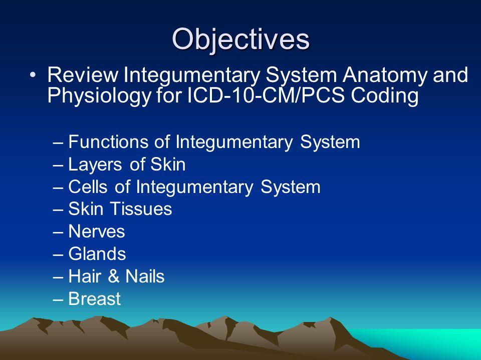 Integumentary Anatomy and Physiology ©Irene Mueller, EdD, RHIA ...