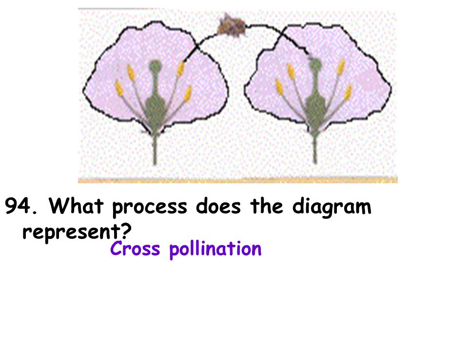 94. What process does the diagram represent Cross pollination